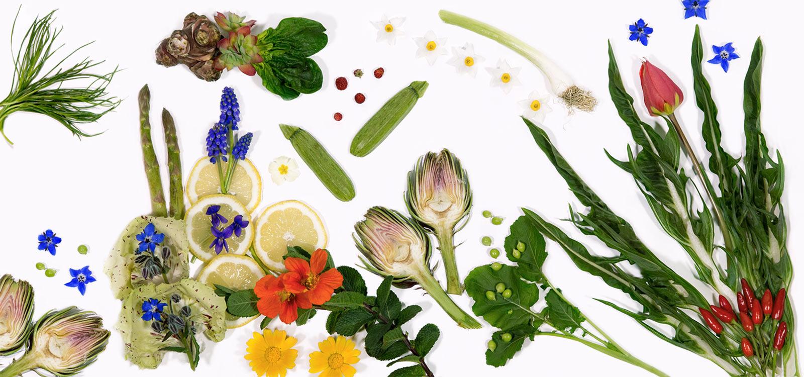 Verdure di stagione dell'Azienda Agricola Biologica Le Case Macerata