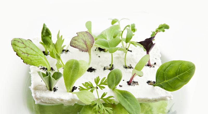 la passione di elvia per le erbe | ristorante le case macerata - Erbe Spontanee In Cucina